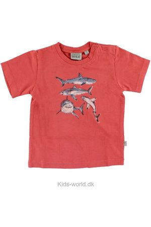 Drenge Kortærmede - WHEAT T-shirt - m. Hajer