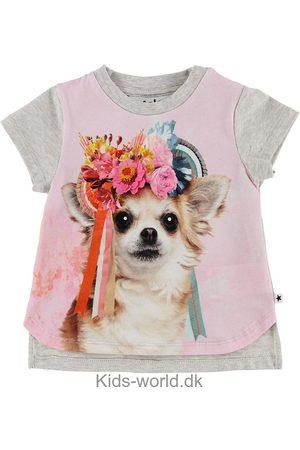Molo T-shirt - Erin - Gråmeleret/Rosa m. Chihuahua